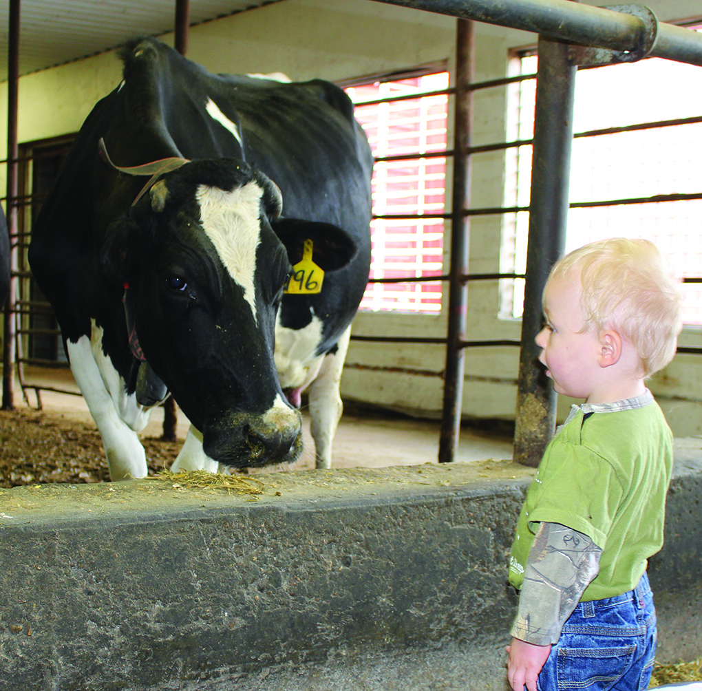 Face to face. Do you know where your milk comes from?